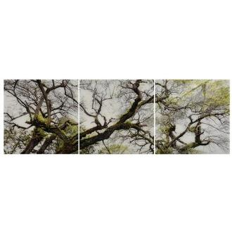 Arbre Set of 3 Acrylic Wall Art